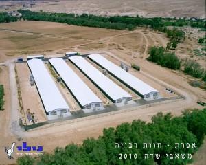 heavy breeder farm in the desert1 300x240 - לולים